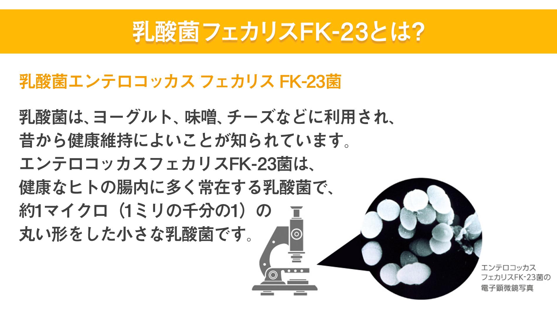 乳酸菌フェカリスFK-23とは?